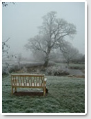 Village pond, Oak tree and Bench - January 2010